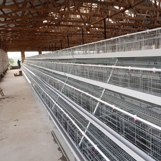 10000 chicken farm in Kitwe(Zambia)